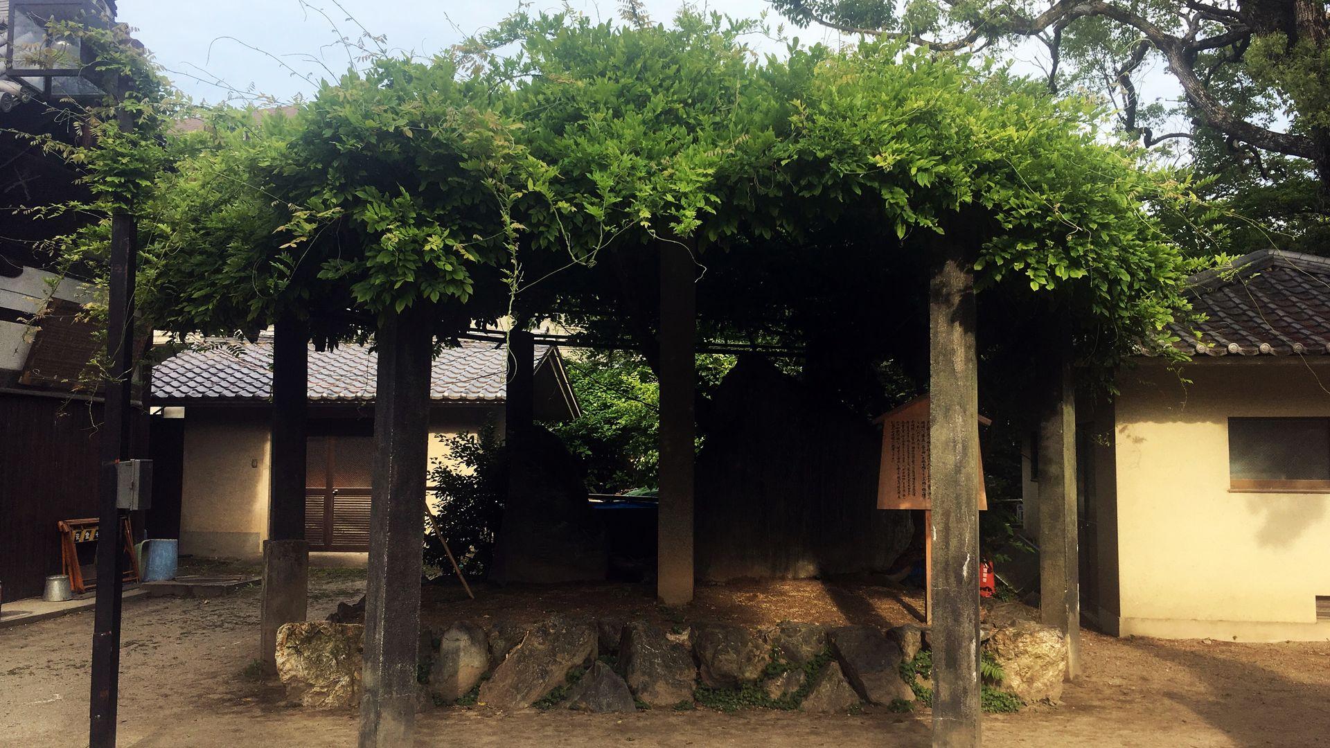藤森神社の藤棚
