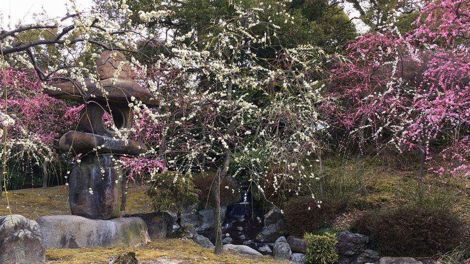 jonangu-flower-01_s