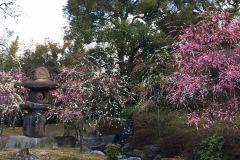 jonangu-flower-02_s