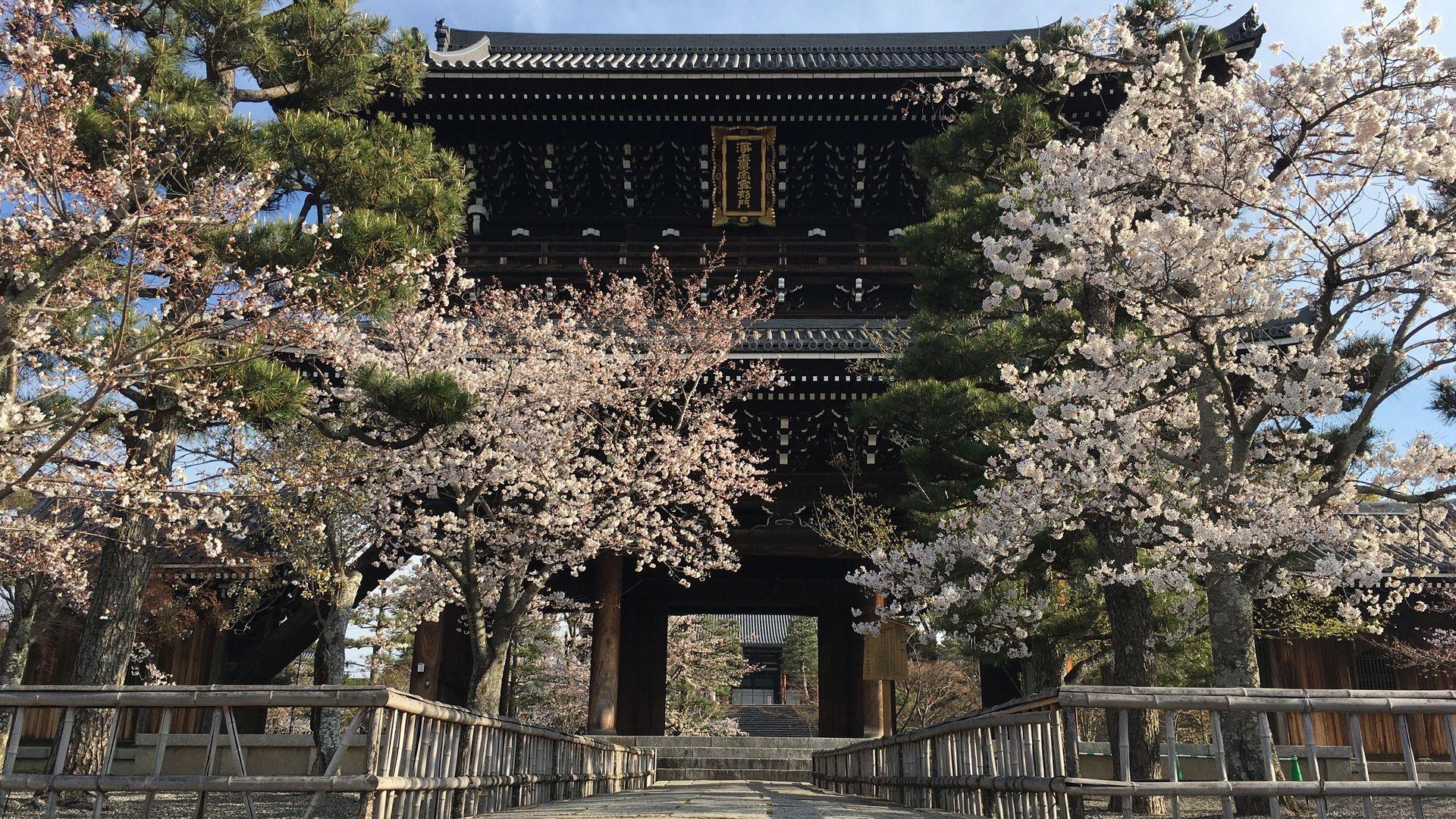 金戒光明寺の桜01