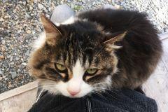 umenomiyataisha-cat-02