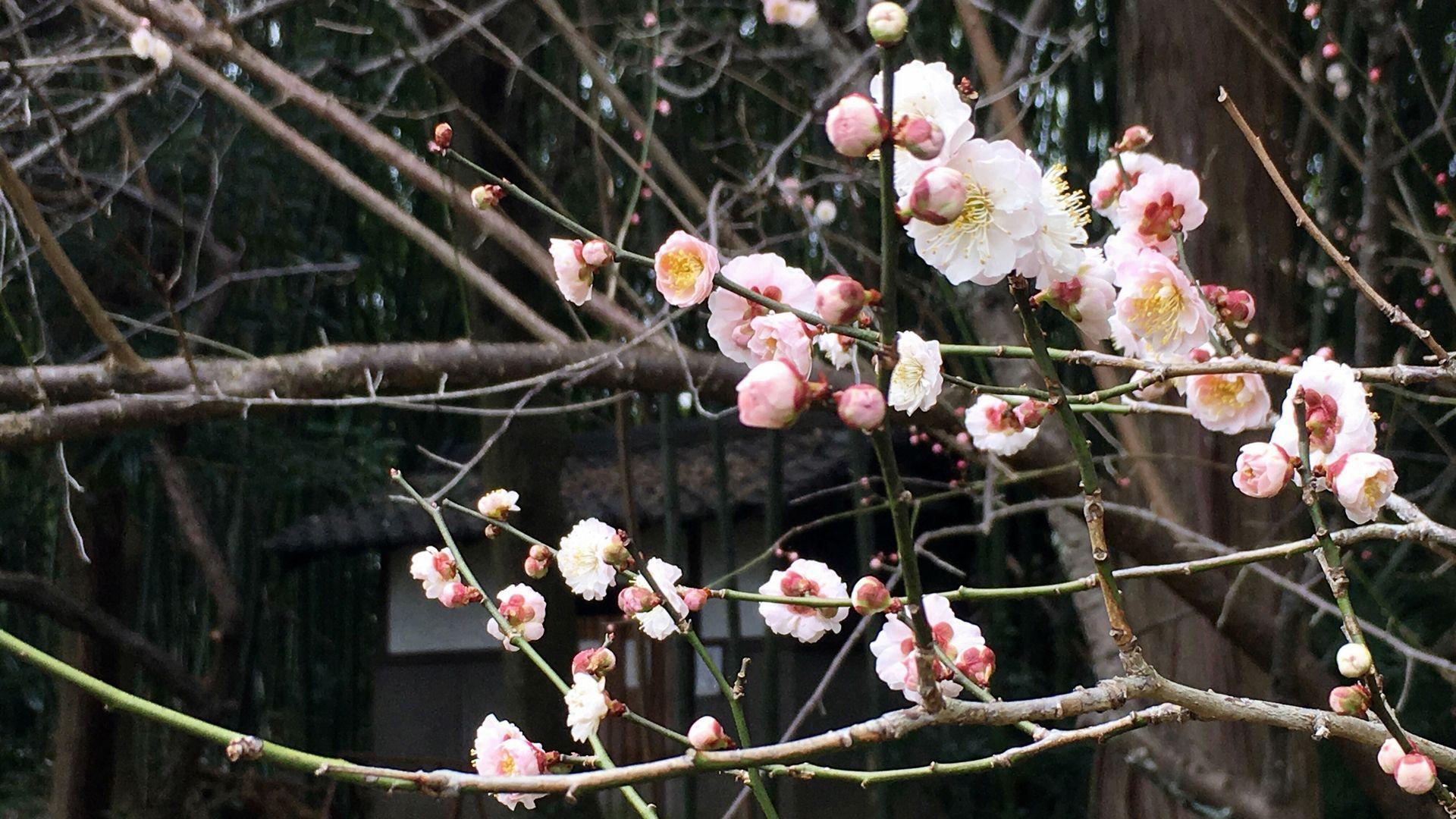 zuishinin-flower-01