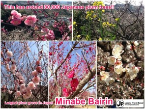 minabe_plumforest_01_en