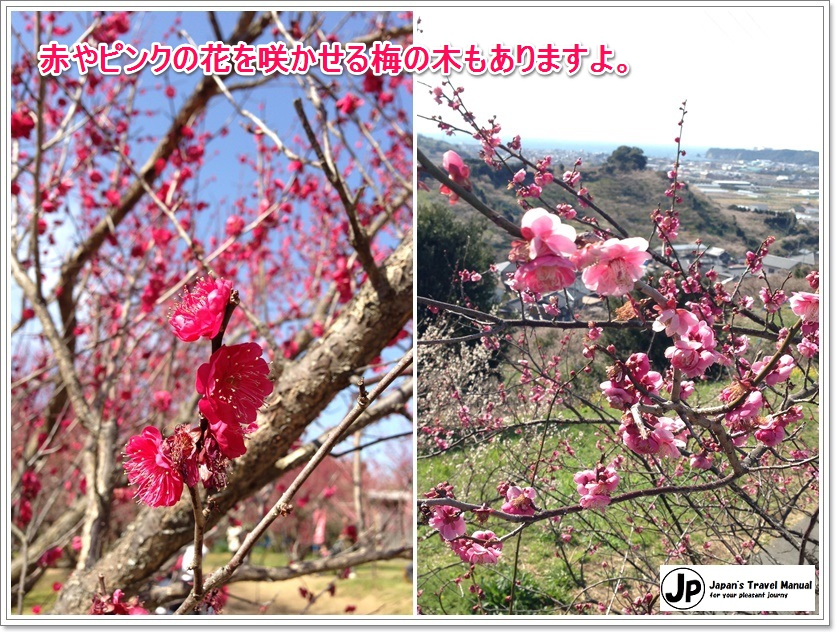 minabe_plumforest_04_jp