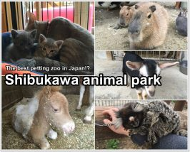 shibukawa-zoo-01_en