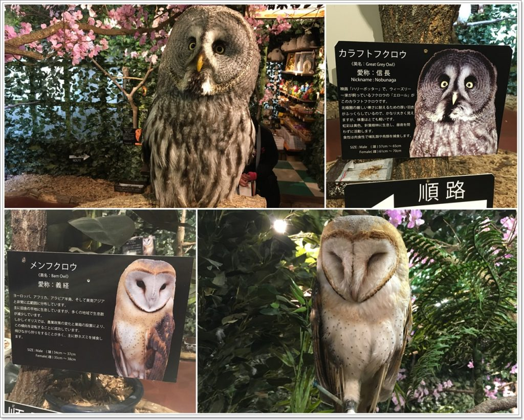 forest_of_owl-01