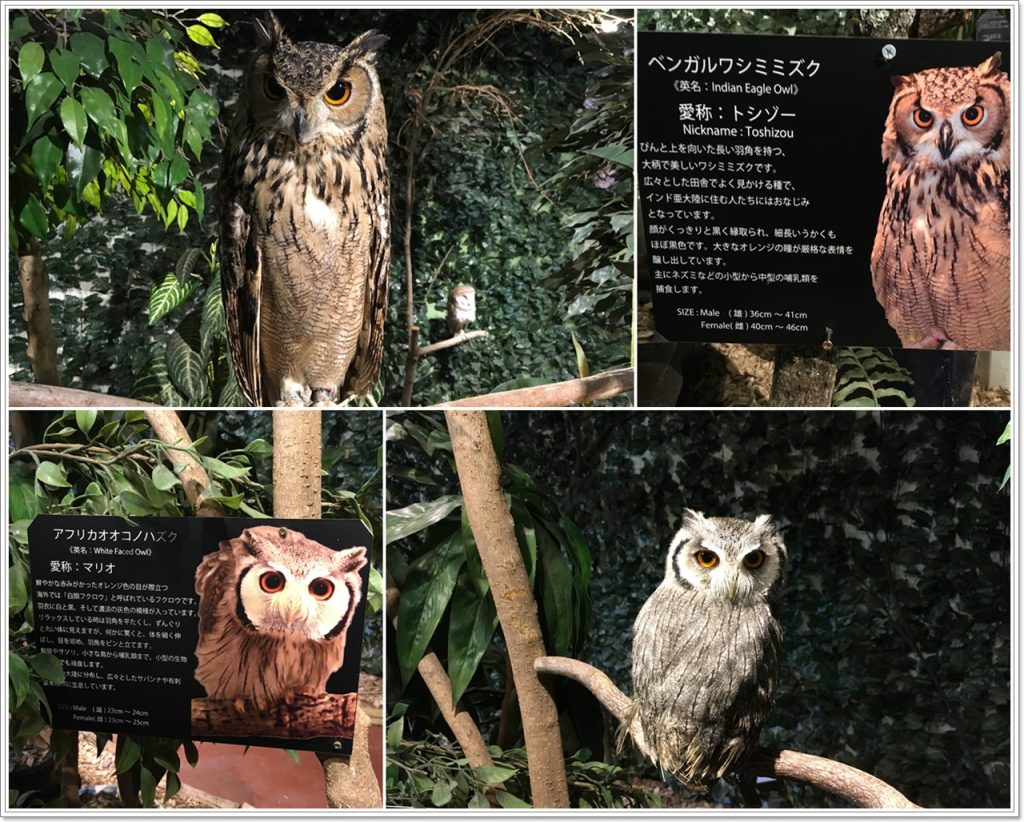 forest_of_owl-02