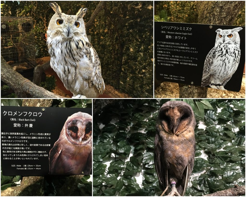 forest_of_owl-03