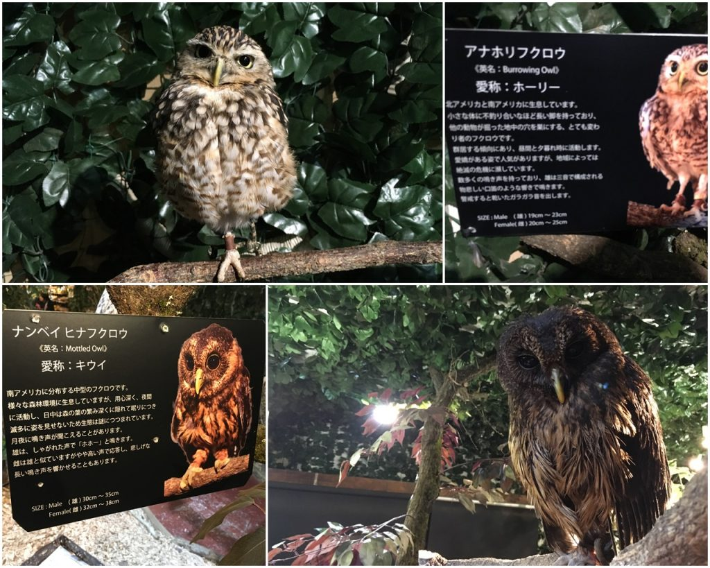 forest_of_owl-05