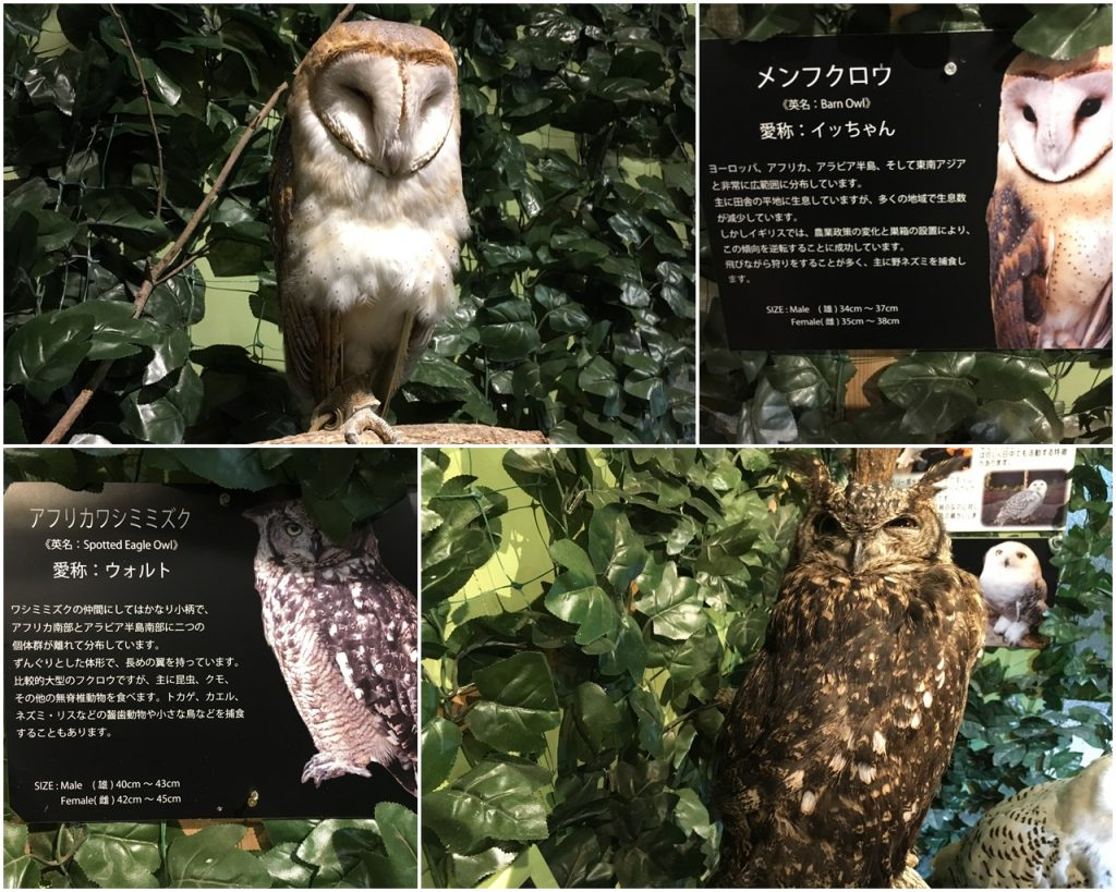 forest_of_owl-06