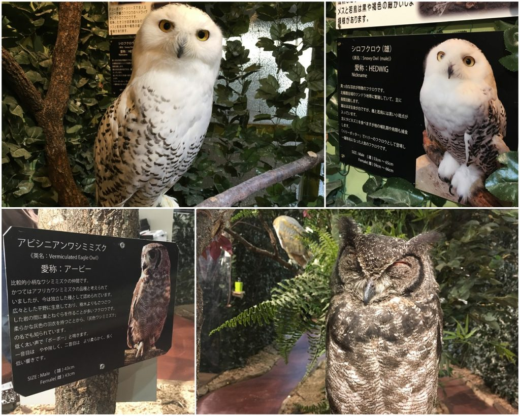 forest_of_owl-07