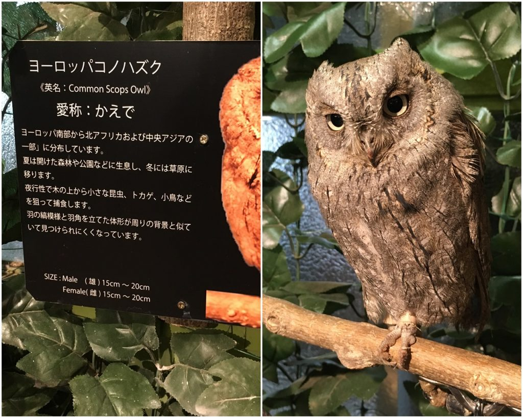 forest_of_owl-08