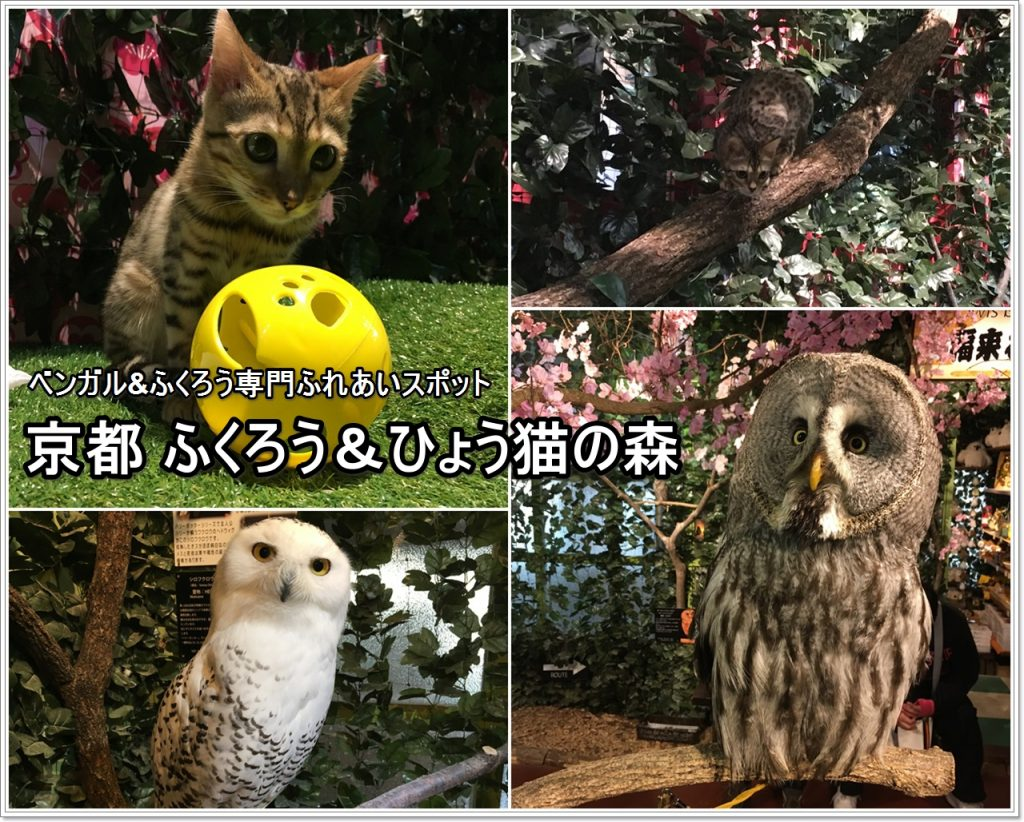 forest_of_owl-09_jp