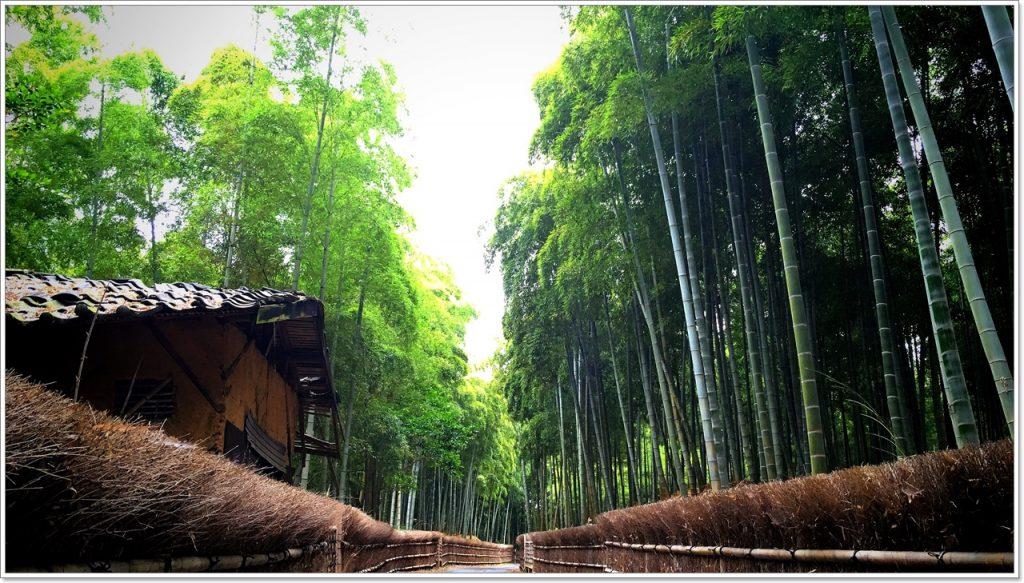 bamboo-road-05