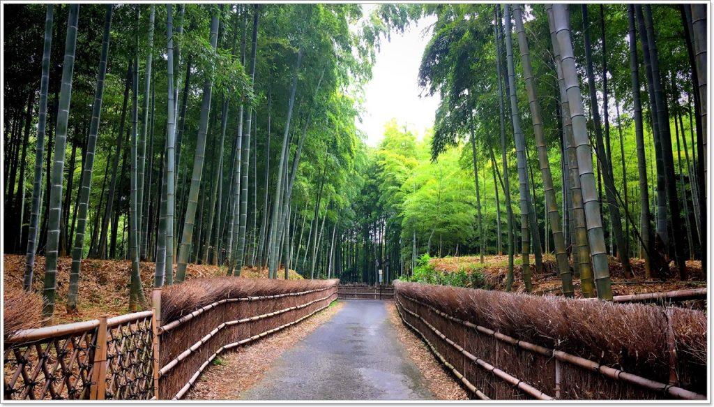 bamboo-road-06
