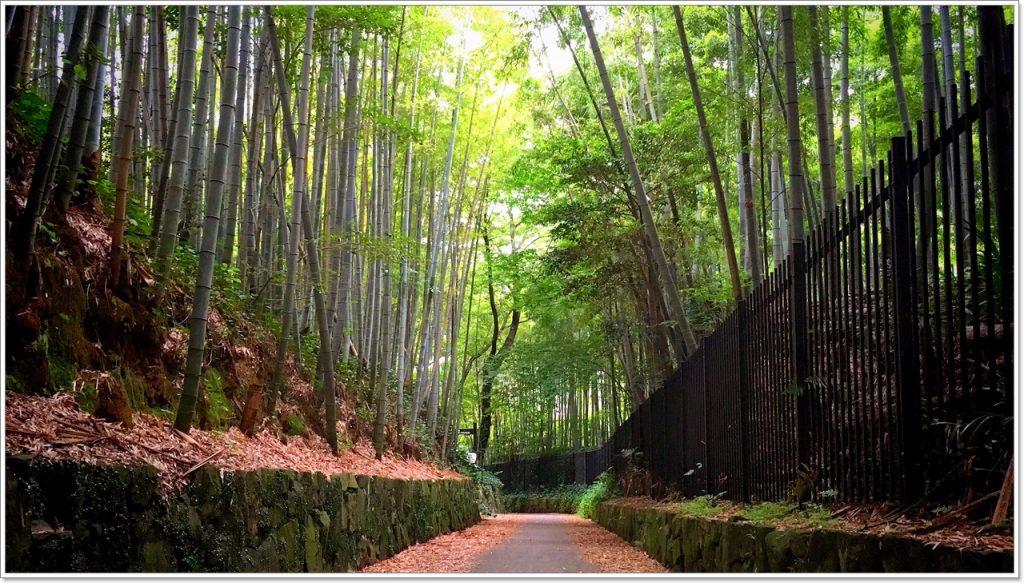 bamboo-road-07