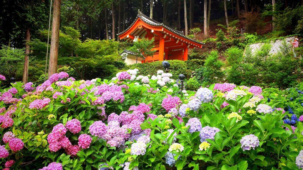 mimuroto-temple-06
