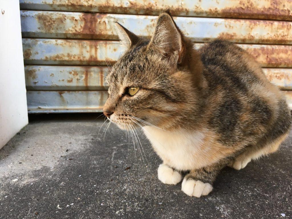 sanagishima-cat-01