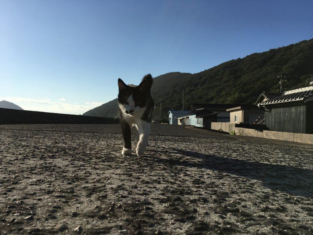 sanagishima-cat-04