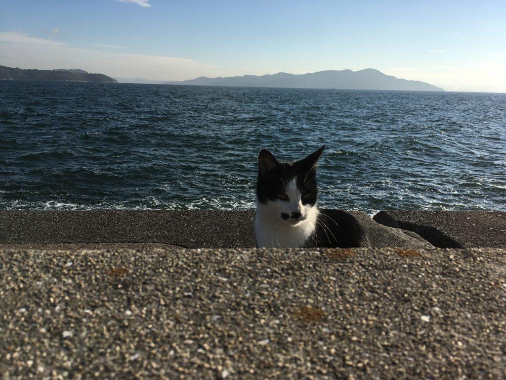sanagishima-cat-05