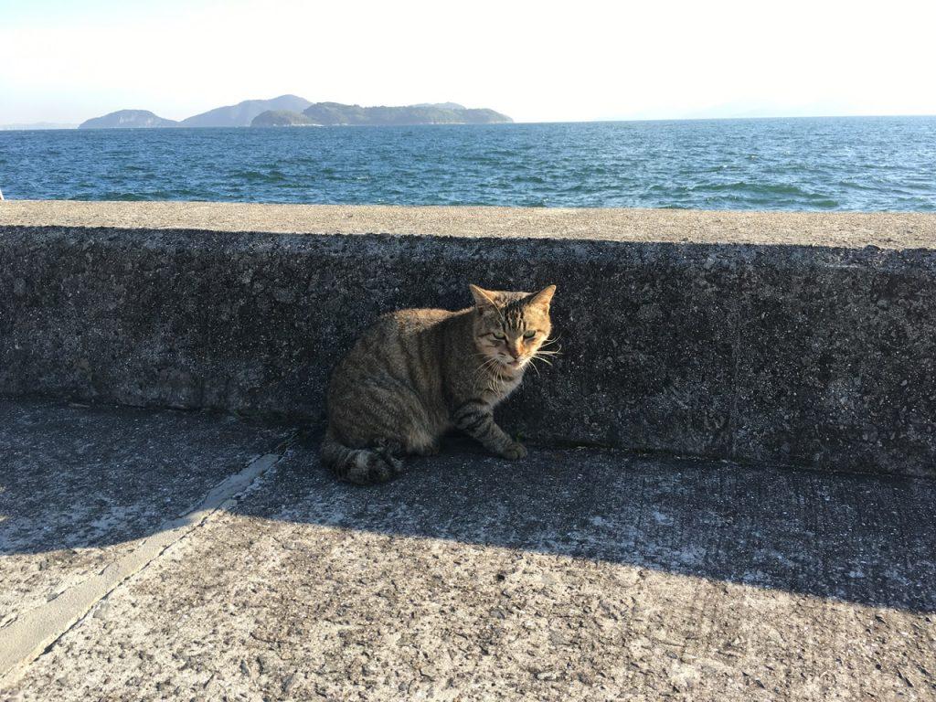sanagishima-cat-07