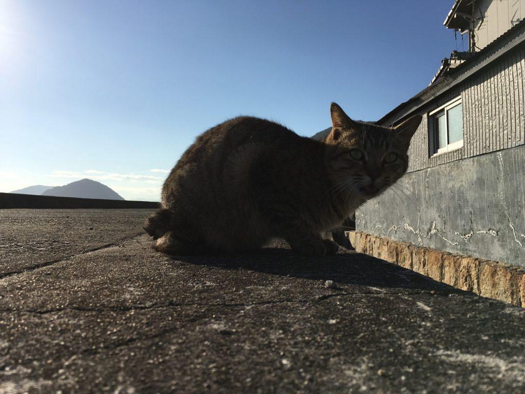 sanagishima-cat-08