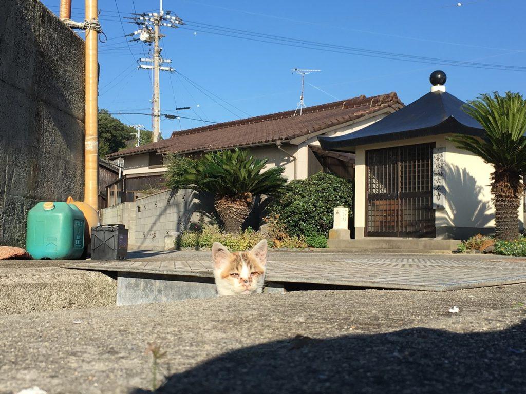 sanagishima-cat-10