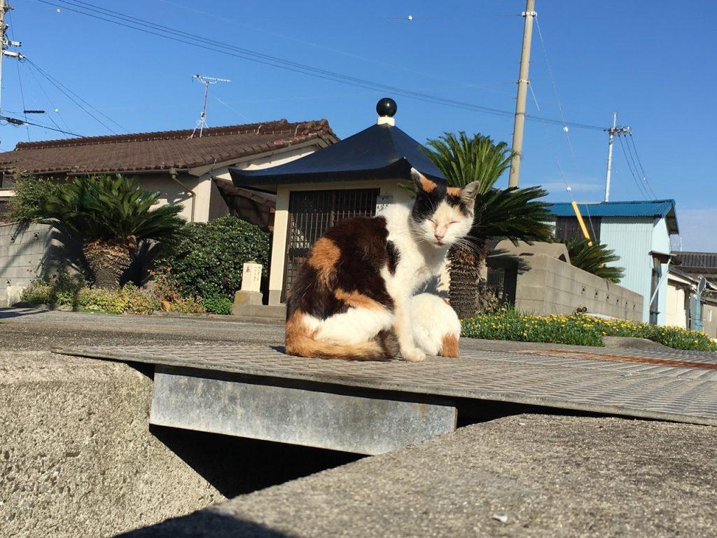sanagishima-cat-13