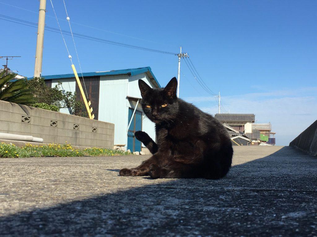 sanagishima-cat-15