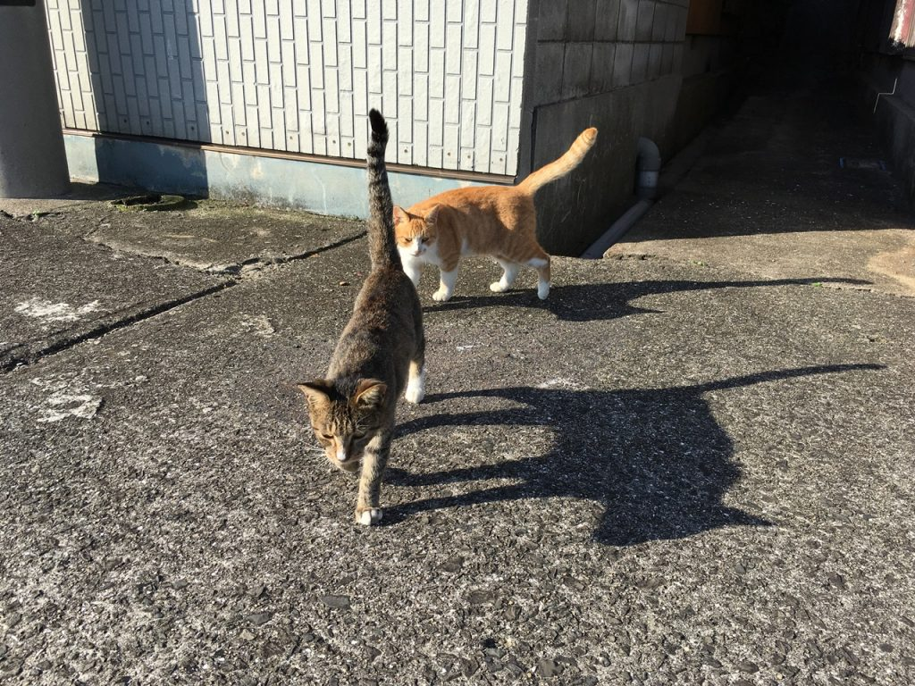 sanagishima-cat-17