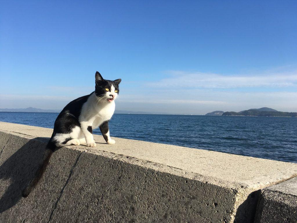sanagishima-cat-24