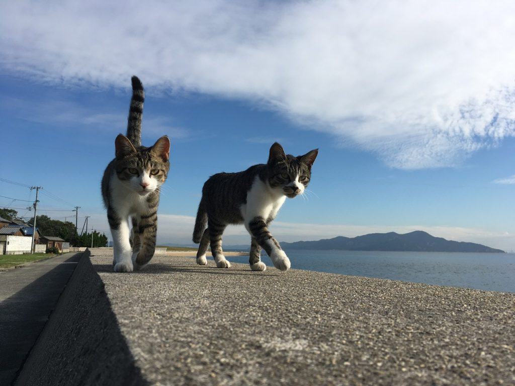 sanagishima-cat-30