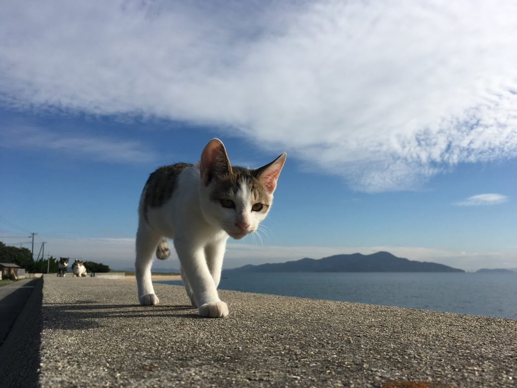 sanagishima-cat-32