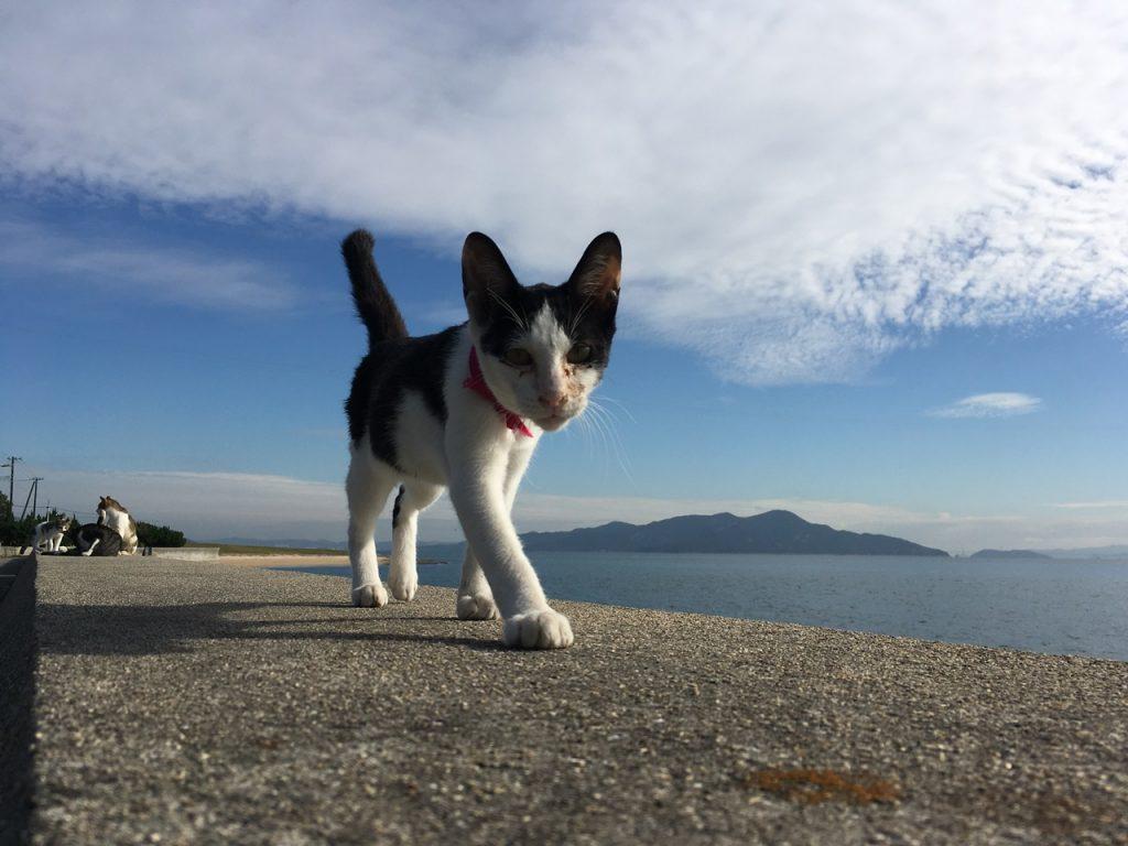 sanagishima-cat-33