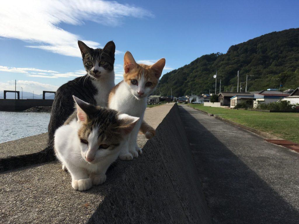 sanagishima-cat-35