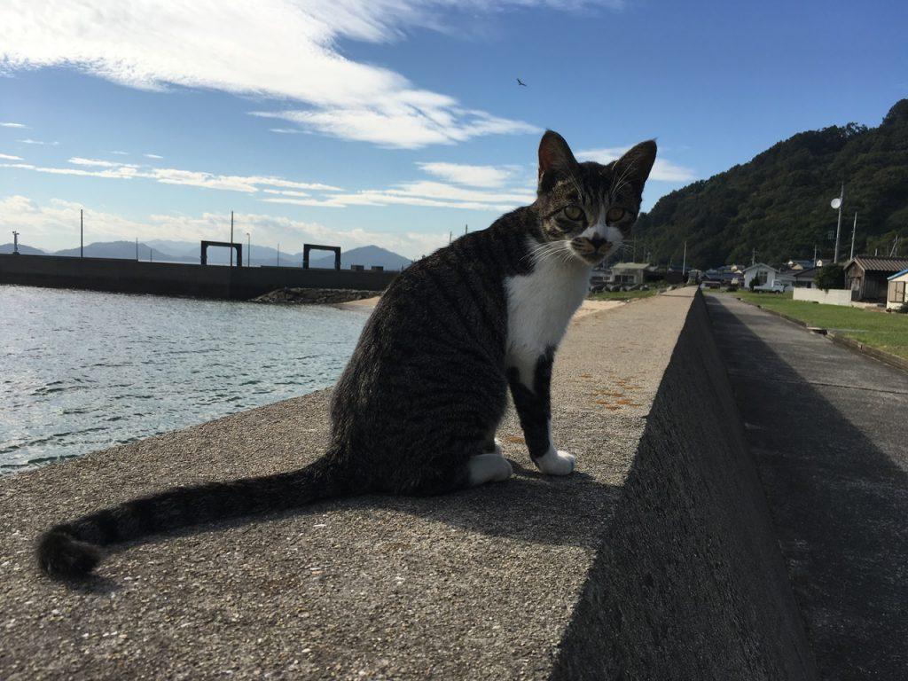 sanagishima-cat-36