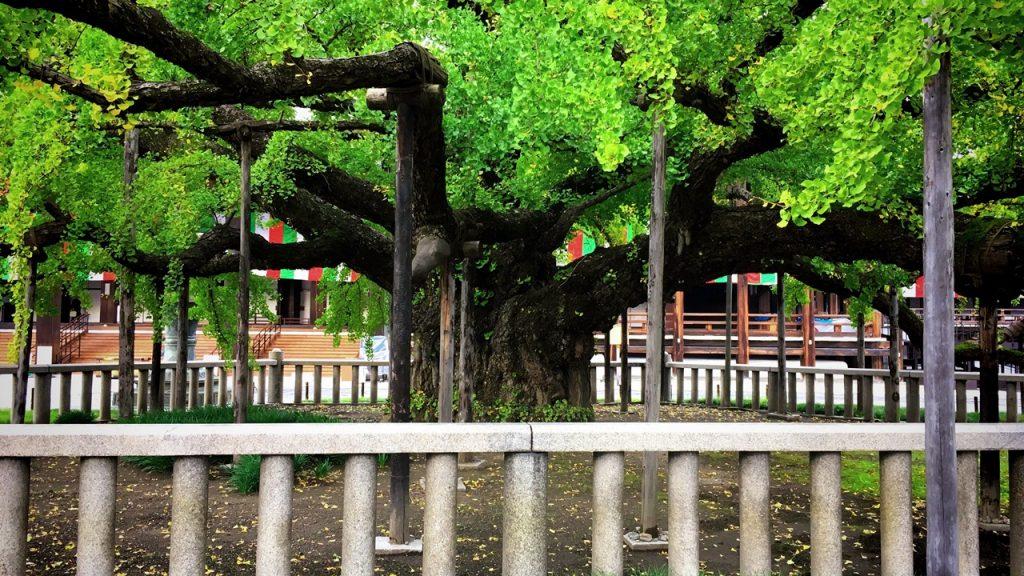 nishihonganji-32