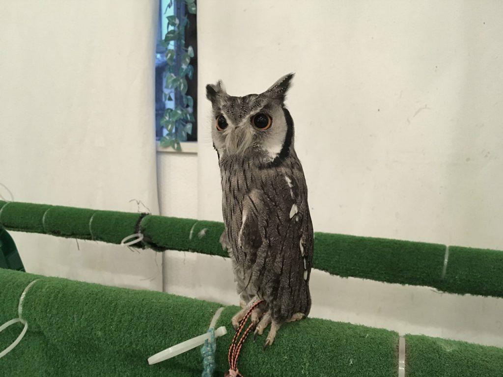 owlfamily-25