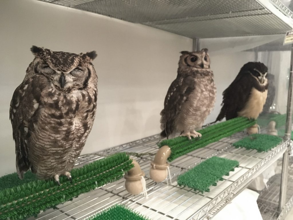 owlfamily-28