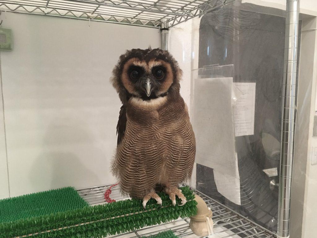 owlfamily-29