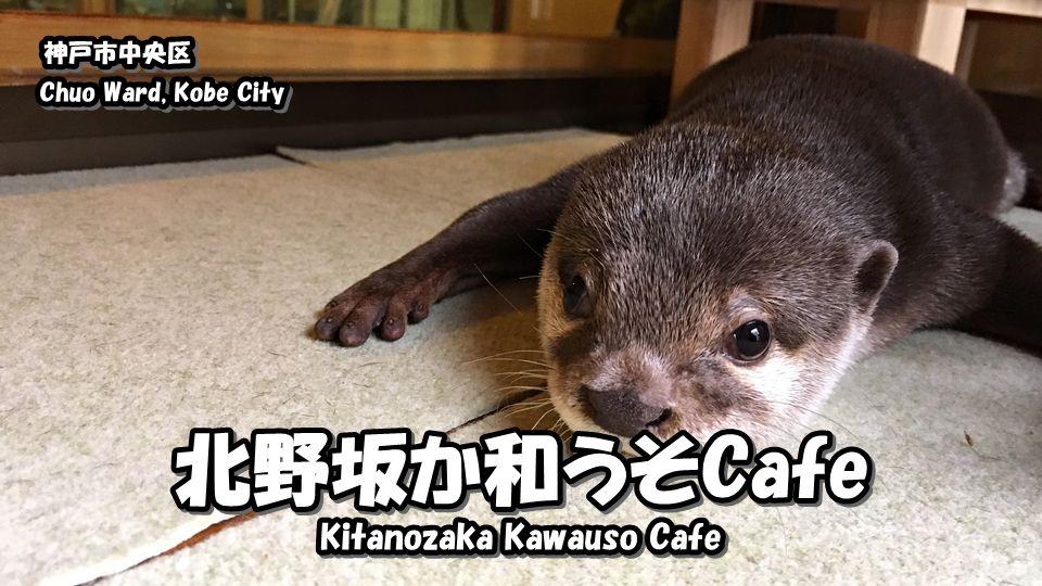 北野坂か和うそCafeさんに行ってきました!|神戸のかわうそカフェ | Japan's Travel Manual