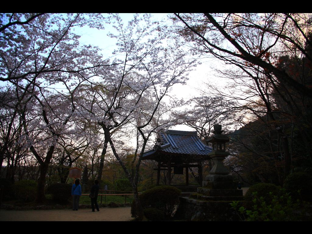 saigyo-zakura