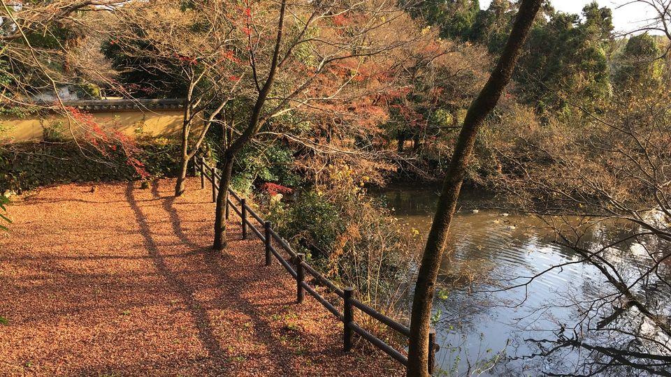 Saeno-no-numa pond of Shoji-ji