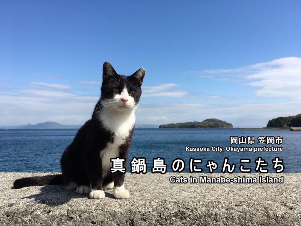 manabejima-01-txt