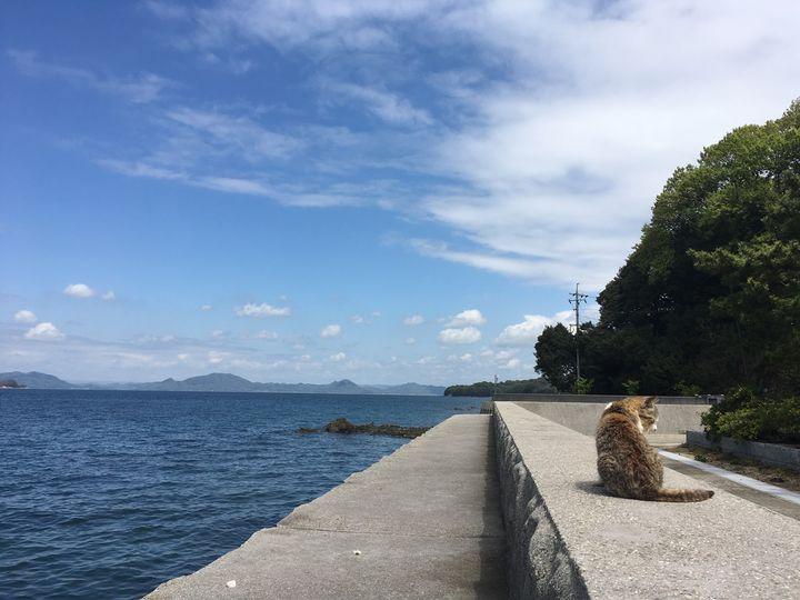 真鍋島の猫の画像