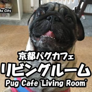 Information of the moving of Pug-cafe Living Room.