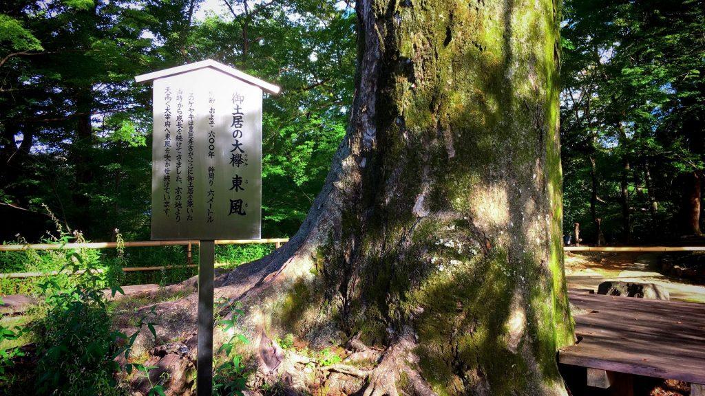 北野天満宮-御土居の大欅
