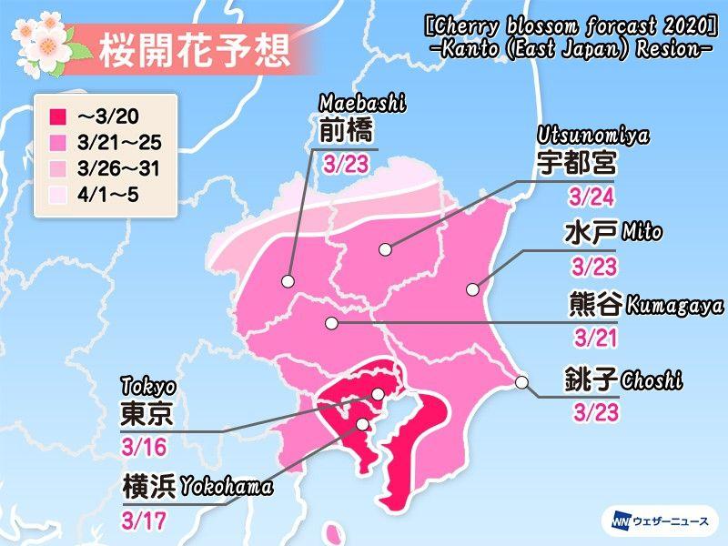 2020年度の関東の桜開花予想(Cherry blossom forcast 2020 -Kanto Resion-)