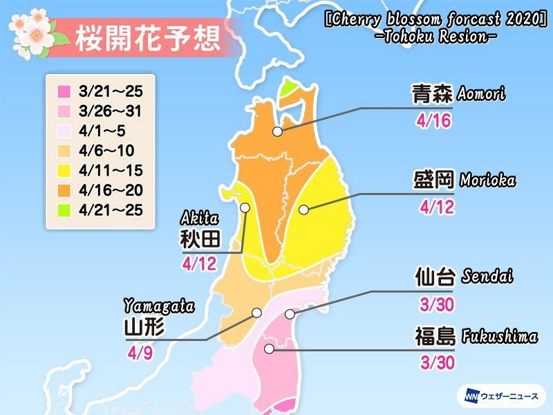 2020年度の東北の桜開花予想(Cherry blossom forcast 2020 -Tohoku Resion-)
