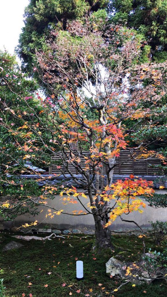 雲龍院-五色の紅葉